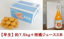 柑橘王国愛媛産温州みかん【早生】約7.5kg+柑橘ジュース3本