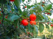 【2021年度発送分】★和歌山県産★富有柿(約3kg)【先行予約分】