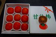 【2021年度発送分】★和歌山県産★紀ノ川柿8個以上(約3kg)【先行予約分】