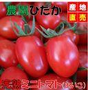 農家直送!原出さんの完熟ミニトマト『あいこ』