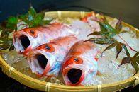 日本海の高級魚のどぐろ一夜干し5匹セット