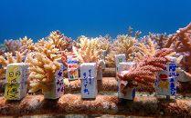 沖縄サンゴの村で『サンゴ苗作り体験』【2名様または、サンゴ2株(1名様)】