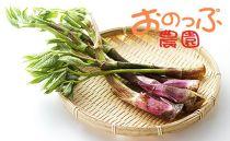 2019年分予約開始★北海道の春山菜お任せセット<おのっぷ農園>