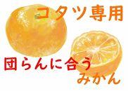 【コタツ専用】団らんに合うミカン10kg