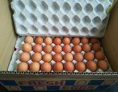 ミネラルを豊富に含んだ越前赤玉子75個+卵割れ補償5個