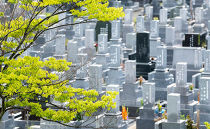 墓地の清掃作業
