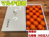 【マルチ栽培・有田みかん】化粧箱『特秀』Mサイズ40玉入