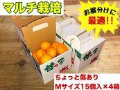 《手さげ箱》ちょっと傷【マルチ栽培・有田みかん】Mサイズ15個入×4箱