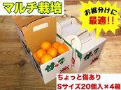 《手さげ箱》ちょっと傷【マルチ栽培・有田みかん】Sサイズ20個入×4箱