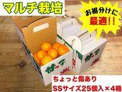《手さげ箱》ちょっと傷【マルチ栽培・有田みかん】SSサイズ25個入×4箱