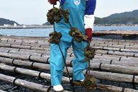 【10月1日より受付開始】殻付き牡蠣★生食用★3kg(40粒前後)【福岡県糸島産】