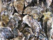 長崎県産 大村湾殻付き牡蠣セット 3.5Kg