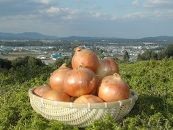 減農薬特別栽培の玉ねぎ(20kg)