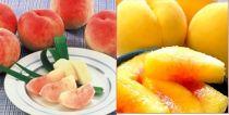 先行予約/今、大人気プチ贅沢な食切りセット美味しい品種を厳選!『川中島白桃&黄金桃1.4kg』