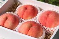 先行予約/今、大人気プチ贅沢な食切りセット 美味しい品種を厳選!『白桃1.4kg』