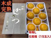 【4月まで木成り完熟させた八朔】『特秀』L×15個入(2段詰)/化粧箱