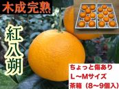 ちょっと傷あり【木成完熟・紅はっさく】L~M(8~9個入)/茶箱