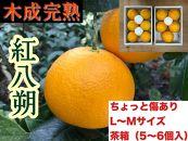 ちょっと傷あり【木成完熟・紅はっさく】L~M(5~6個入)/小箱