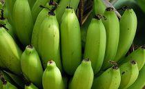 有機JAS認証オーガニック島バナナ2.0kg