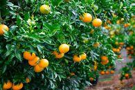 古民家育ちの『有田みかん&季節の柑橘』定期便(計4回)