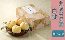 BU06【約2.2kg】井頭栄果園 白桃