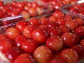【2020年度産先行受付】果実の宝石 贈答用「佐藤錦 500g×2P L~2L」