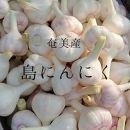 【先行予約受付】奄美の農家から直送 島にんにく 生3kg(Mサイズ、50~60コ)