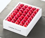 A050 さくらんぼ佐藤錦手詰500g(化粧箱入)