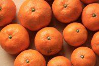 紀州の自然農法みかん5kgサイズ無選別農薬・肥料・除草剤不使用