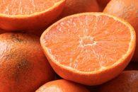 紀州の自然農法みかん9.5kgサイズ無選別農薬・肥料・除草剤不使用