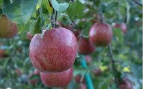 たっぷり味わえる4.5kg(14~20個)!甘味・酸味・歯ごたえの三拍子揃った青森りんご葉とらずふじ