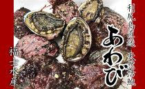 2019年分受付!北海道利尻島産天然!活エゾアワビ特大1kg【福士水産】