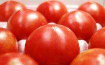 24~35玉入!糖度9度以上!スーパーフルーツトマト
