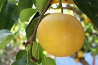 ★8月発送★果汁滴る絶品の梨(約4Kg)