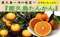 冬の味覚「屋久島たんかん」 Lサイズ5kg