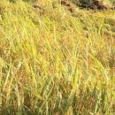 能登牛農家さんが作った味くらべお米セット