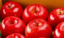 ふじむら農園の盛岡りんご『サンふじ』3kg