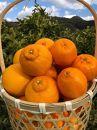 【産地直送】食べ頃柑橘おまかせバラエティーセット