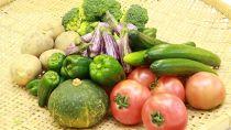 《4月~発送》季節の旬野菜の詰め合わせ(前期)