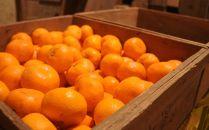 蔵出しみかん10kg S・M・Lサイズお任せ 和歌山県より農園直送