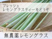 【宮古島産】無農薬栽培レモングラス(生・フレッシュ)400g