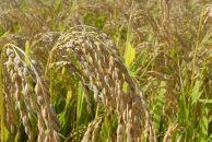 BM048『庄内平野、風とくらす』特別栽培米はえぬき5kg<かりんと付>