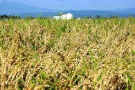 BM050『庄内平野、風とくらす』特別栽培米つや姫5Kg<かりんと付>