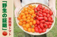 【2020年発送分】亜熱帯トマト「野生の証明」