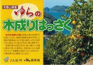 JA紀州 木成り八朔 Lサイズ 10kg