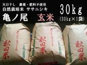天日干し 農薬・肥料不使用 自然栽培米「ササニシキ」または「亀ノ尾」玄米 30kg