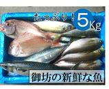 旬の鮮魚セット 5㎏