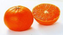 【2020年2月中旬以降出荷】みかんの大トロと呼ばれる希少柑橘和歌山県有田産せとか5kg