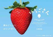 【数量限定】佐賀県産いちごさん
