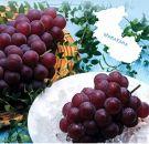 ≪和歌山県産≫果汁滴る味惑の美味しさピオーネ4房(約4kg)